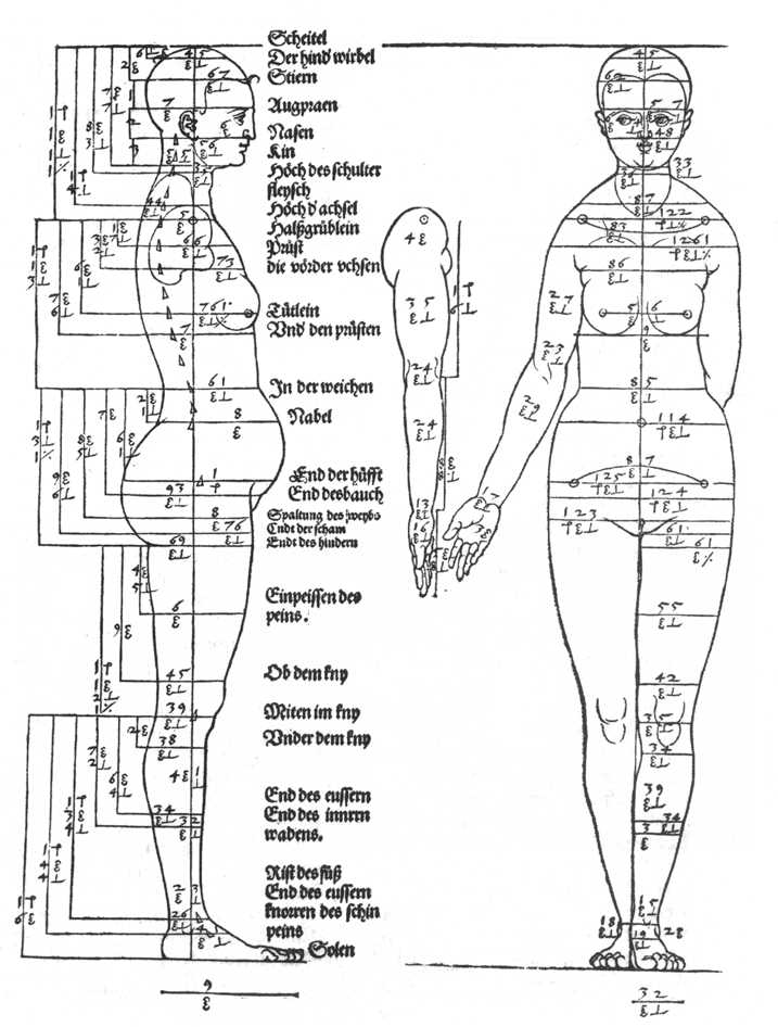 Studies on the proportions of the female body by drer for Antropometria humana