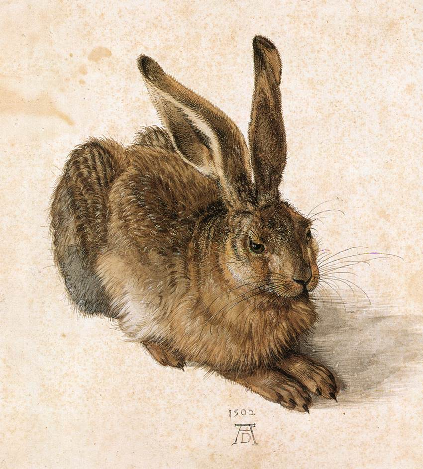 Young Hare by Albrecht Durer
