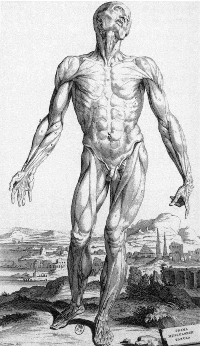 We World English Anatomy By Andreas Vesalius